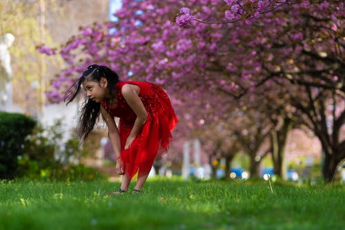 Free stock photo of beautiful girl, cherry blossom, cute, girl