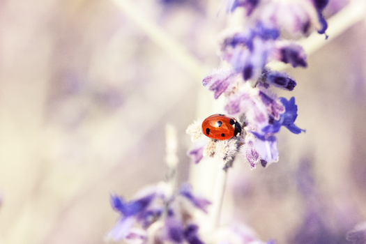 Free stock photo of nature, flowers, purple, animal