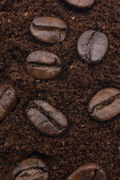 Brown Coffee Beans on Brown Soil