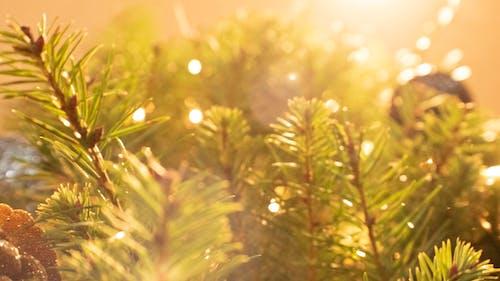 Immagine gratuita di albero di natale, luci di natale, pino, vacanze