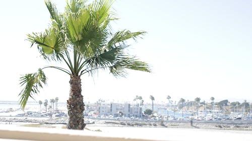 Immagine gratuita di palma, san diego, spiaggia, vista sulla spiaggia