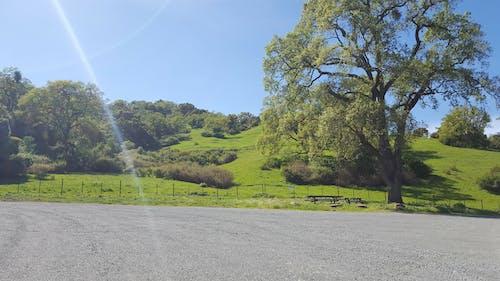 Immagine gratuita di alberi, luce del sole, natura, raggio di sole