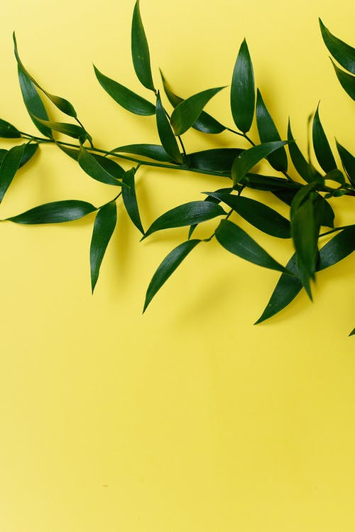 Green Leaves on Yellow Background