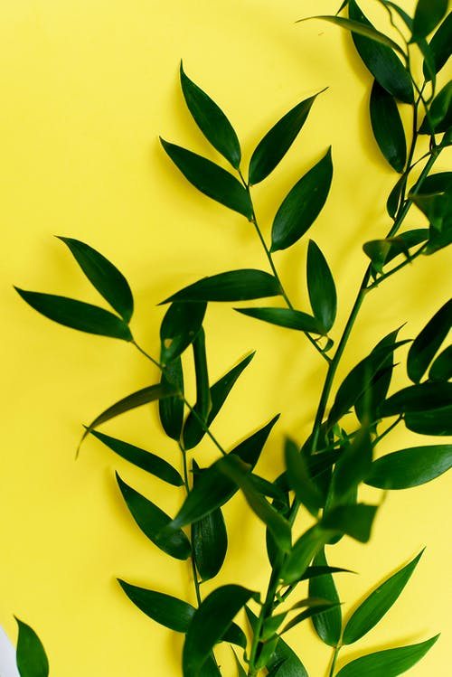 Green Plant on Yellow Background