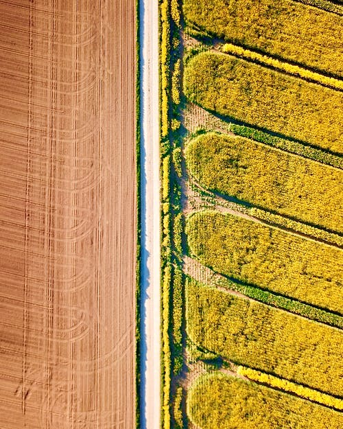 Bright agricultural plantations in countryside in summer