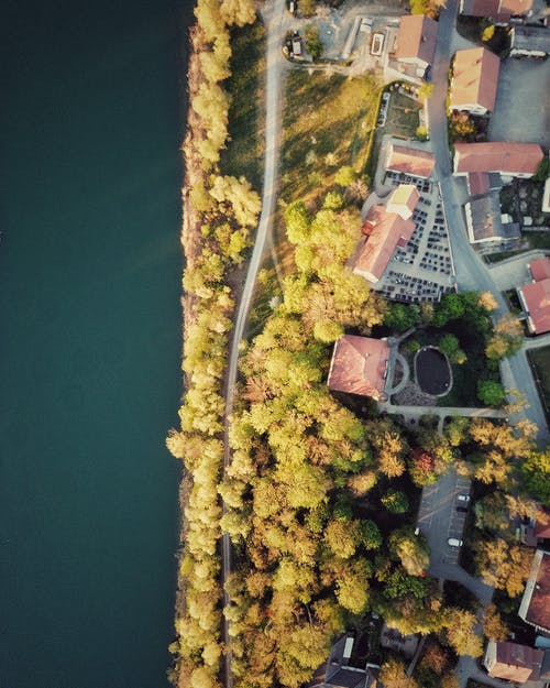 Drone view of bright trees and building roofs near road and sea in suburb in autumn