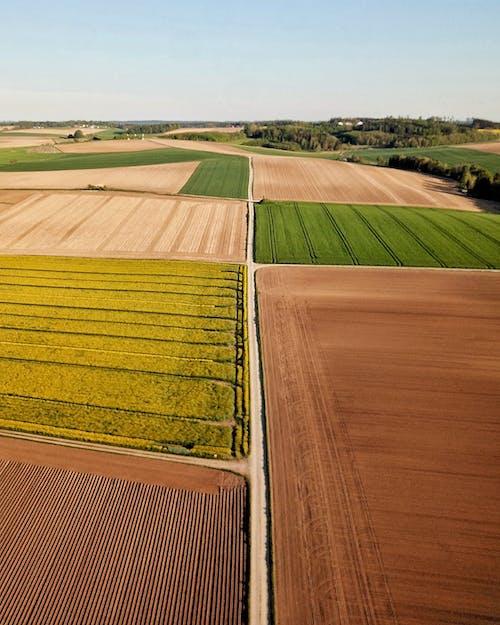 不同的彩色農業領域,在農村的天空下
