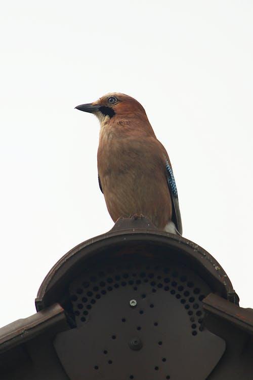 Free stock photo of vogel