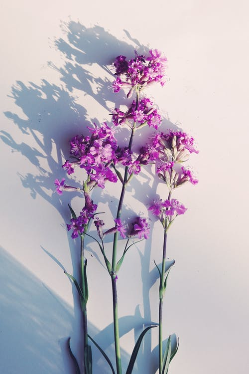 Close-Up Shot of Purple Flowers