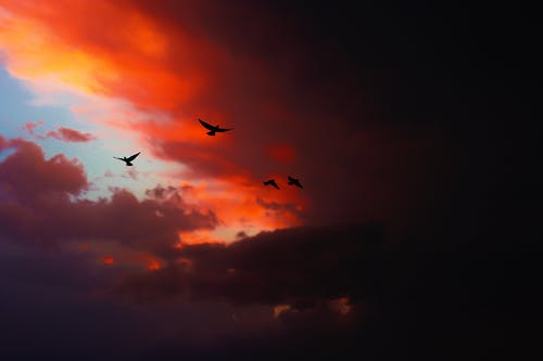 Free stock photo of above clouds, beautiful sky, birds