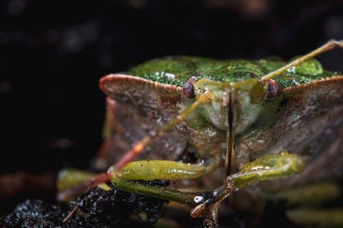 Free stock photo of beetle, green bug, insect, macro