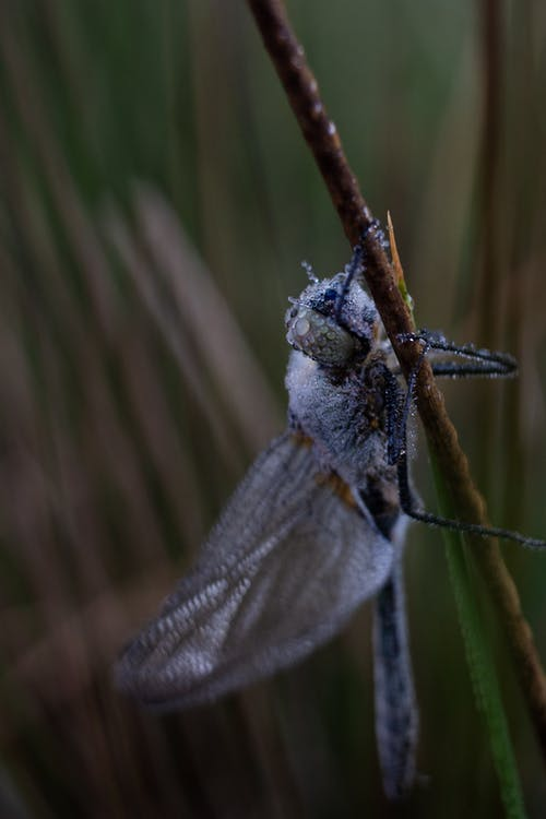 Free stock photo of dew, dragon fly, insect