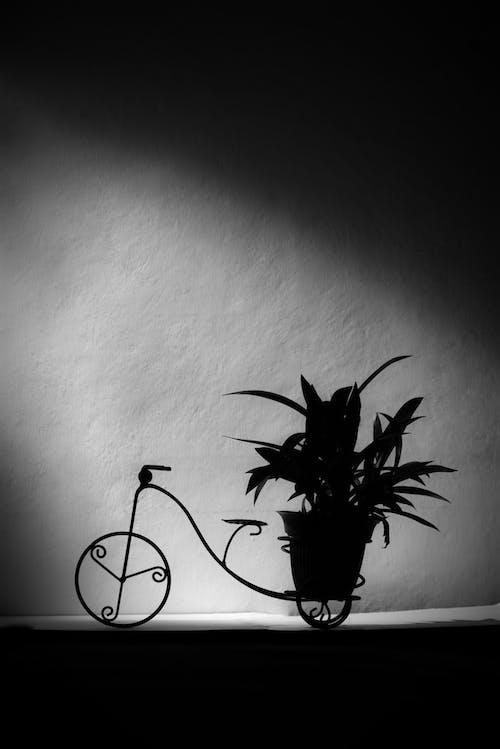 Photos gratuites de blanco y negro, détalle, sombra