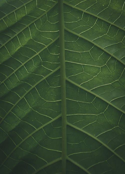Green fresh leaf of tropical plant