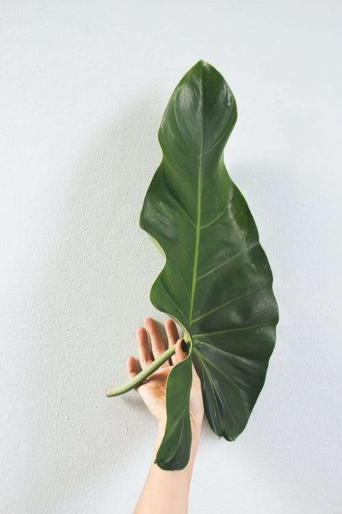 Green Leaf Plant on White Wall