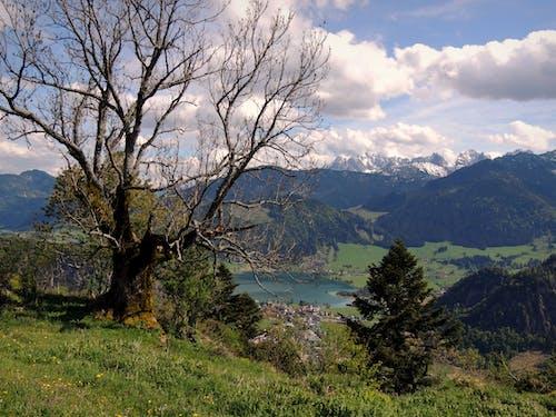 Free stock photo of Alpen, ausblick, baum, blick auf die berge
