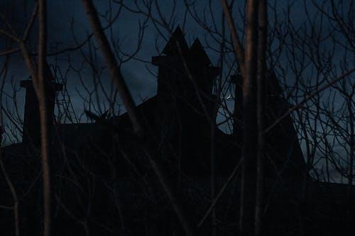 Darmowe zdjęcie z galerii z ciemność, ciemny, drzewa, gałęzie