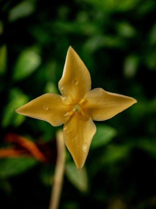 Free stock photo of flower, macro, macro photo