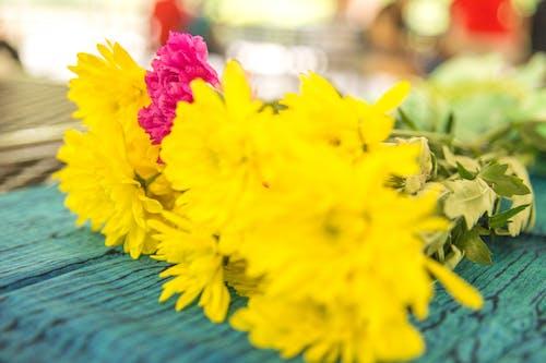꽃, 노란색, 빨간, 아름다운 꽃의 무료 스톡 사진