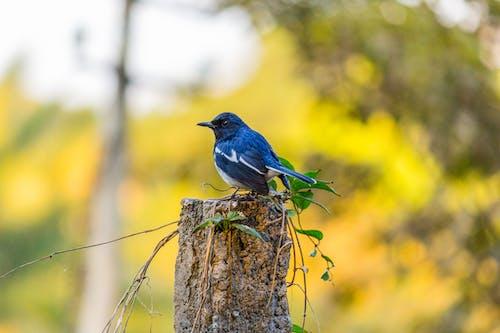 Základová fotografie zdarma na téma canon, divočina, doyel, fotografie divoké přírody