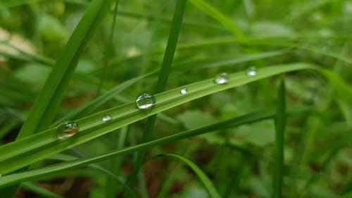 Foto d'estoc gratuïta de aigua, creixement, ecologia, fresc