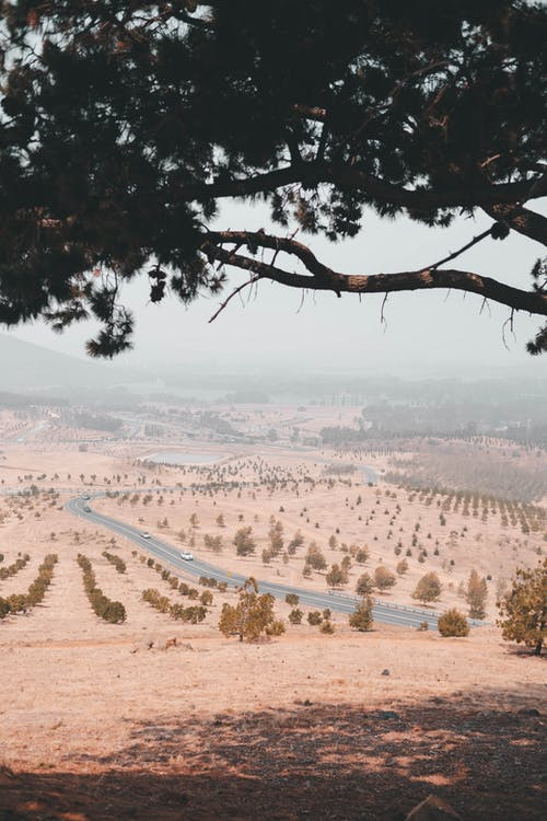 Green Trees on Brown Sand