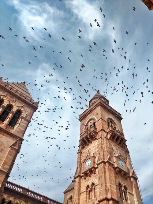 Low angle of historic Prag Mahal Palace with clock tower located in India against blue sky and flock of birds