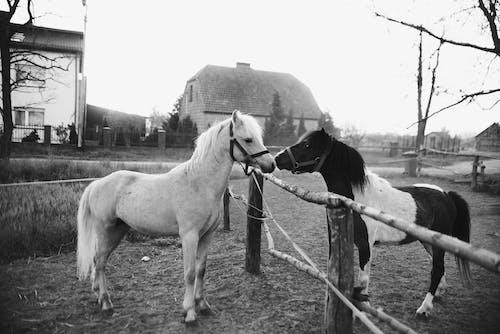 Fotobanka sbezplatnými fotkami na tému bariéra, cicavec, čierna a biela, čiernobiely