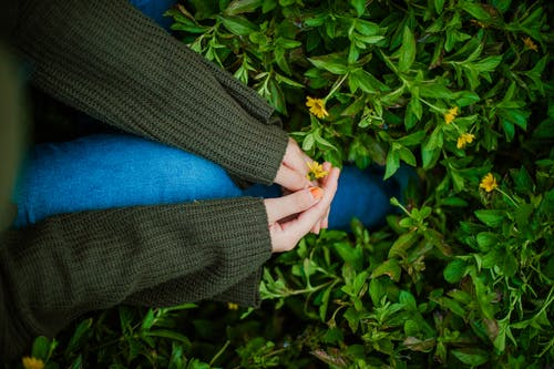 Top view of crop anonymous female in knitted sweater and jeans sitting on green lawn and touching small yellow flowers in autumn garden