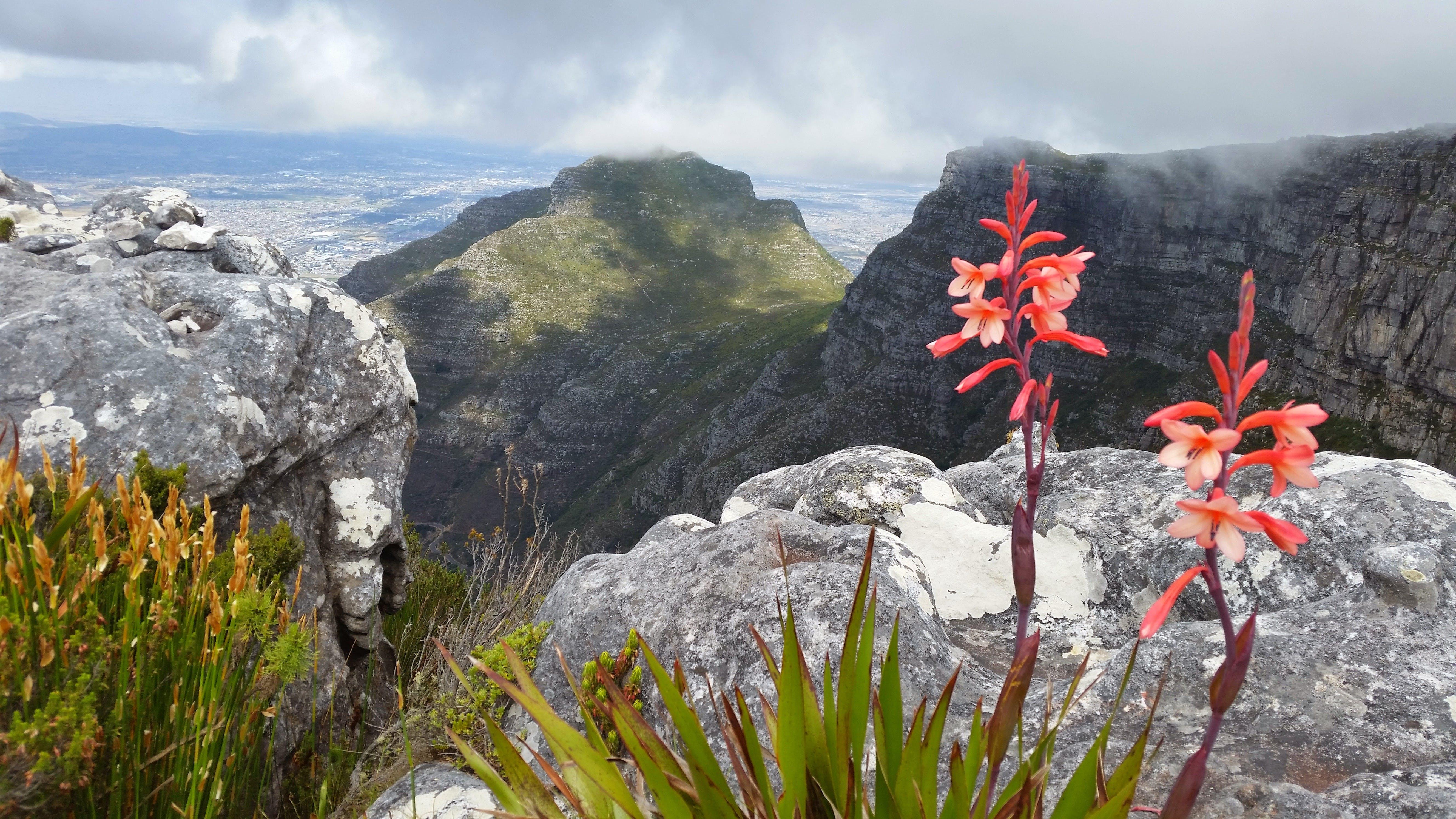 Základová fotografie zdarma na téma bouře, horské květiny, hory, Kapské město