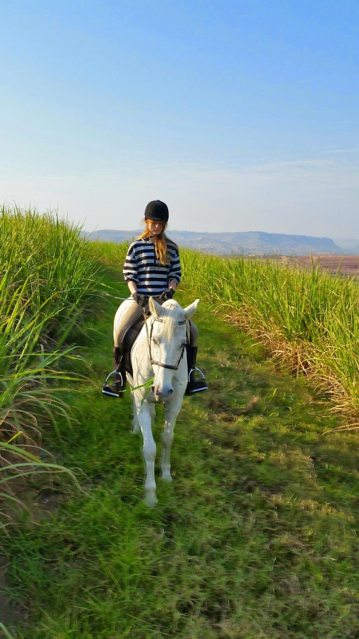 Základová fotografie zdarma na téma cukrová třtina, dívka na koni, jezdec na koni, jízda v hlíně
