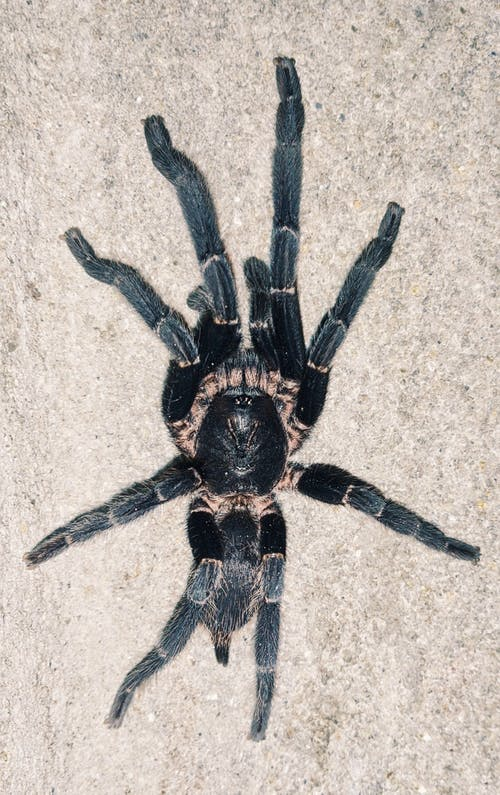 Foto profissional grátis de aranha preta