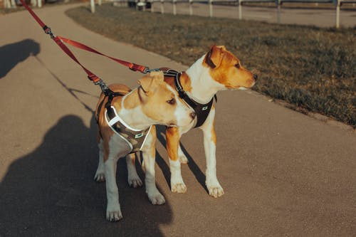 Dogs standing on street on sunny day