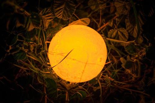Free stock photo of bokeh, grass, moon, moon lamp