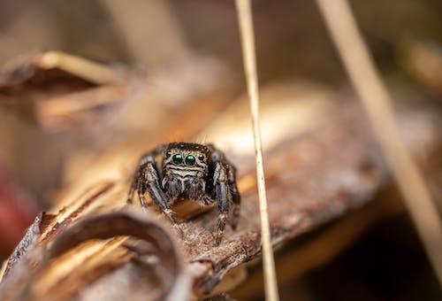 Photos gratuites de aboiement, animal, arachnida
