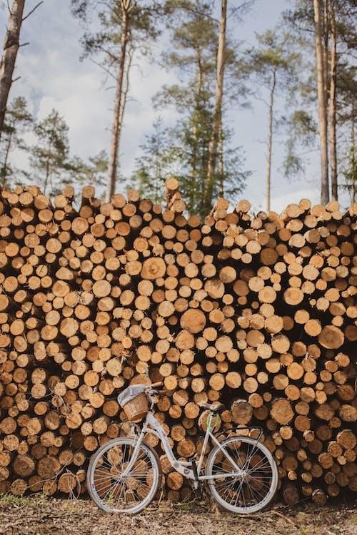 Stapel Brennholz In Der Nähe Von Fahrrad Und Bäumen