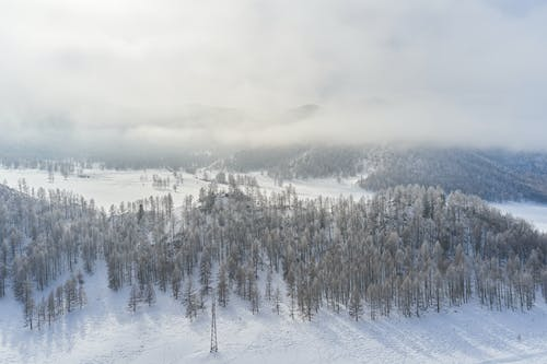 Snowy coniferous forest against cloudy sky in winter