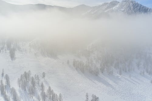Picturesque drone view of snowy slope with trees of mountain ridge in cloud in sunlight