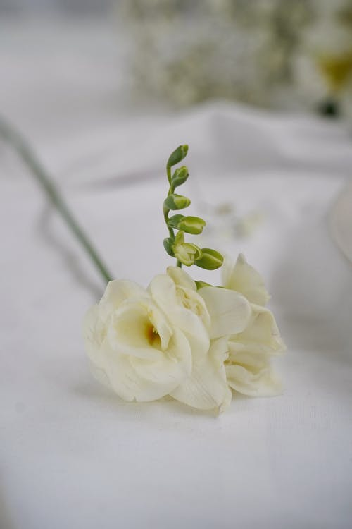 White Rose on White Textile