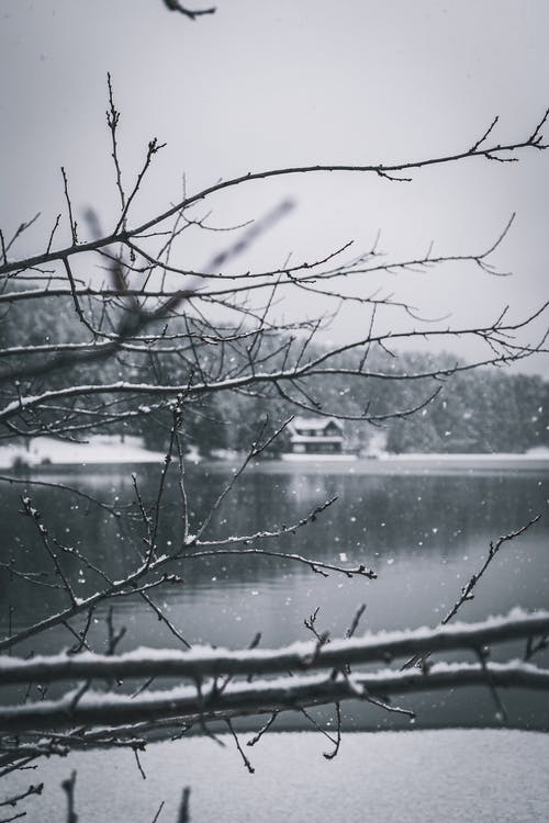 Black and white of leafless tree twigs covered with snow near pond and house under sky in wintertime