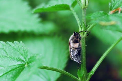 Бесплатное стоковое фото с beetle, дикий, зеленый, максросъемка
