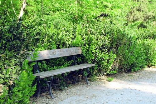 Бесплатное стоковое фото с зеленый, лес, лето, одинокий
