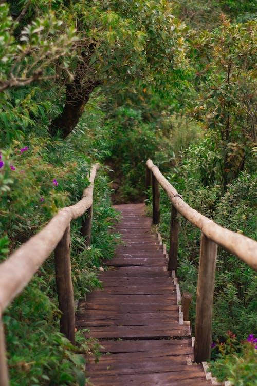 Narrow suspension bridge between lush green trees