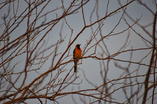 Colorful bird resting on dry tree twig