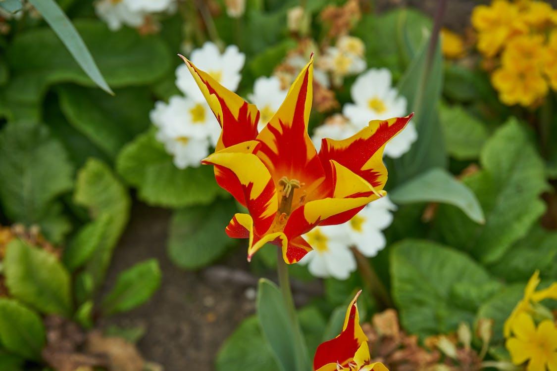 Free stock photo of à tÃ, botanique, fleur