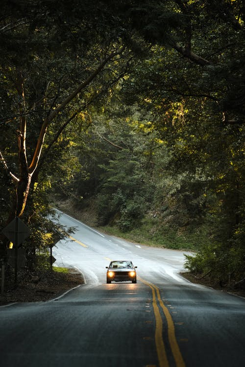 Car driving on road through tree arch