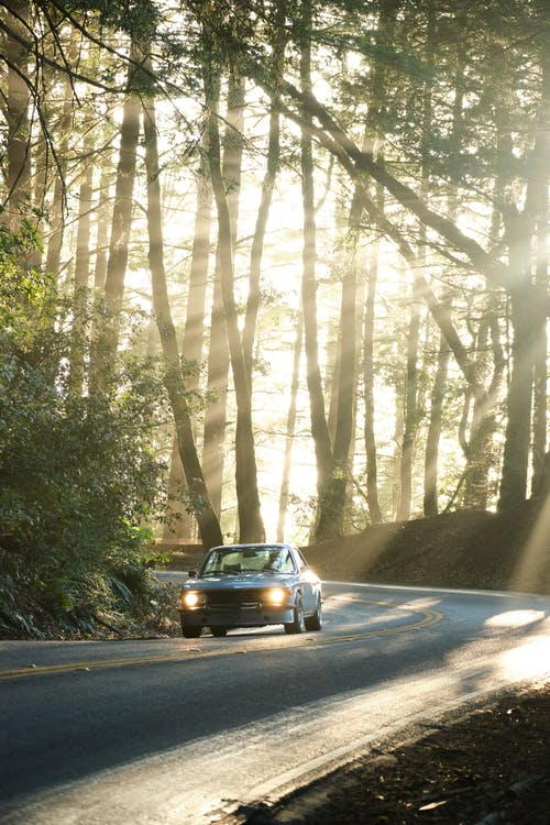 Vintage car riding on road in forest