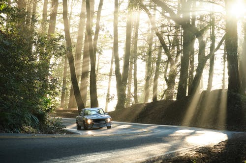 Car riding on road in forest in sunlight