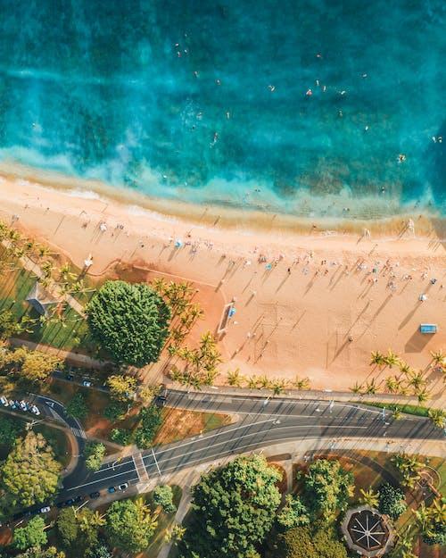 Aerial View of Green Trees Near Beach