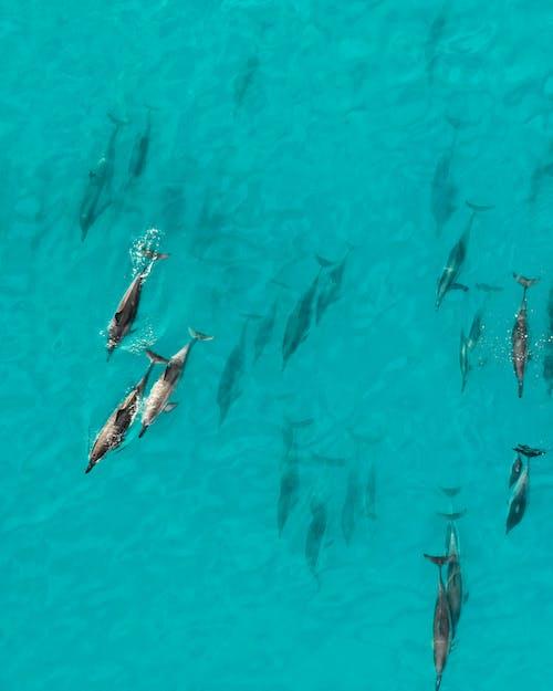Photos gratuites de dauphin sous l'eau, dauphins, drone, eau